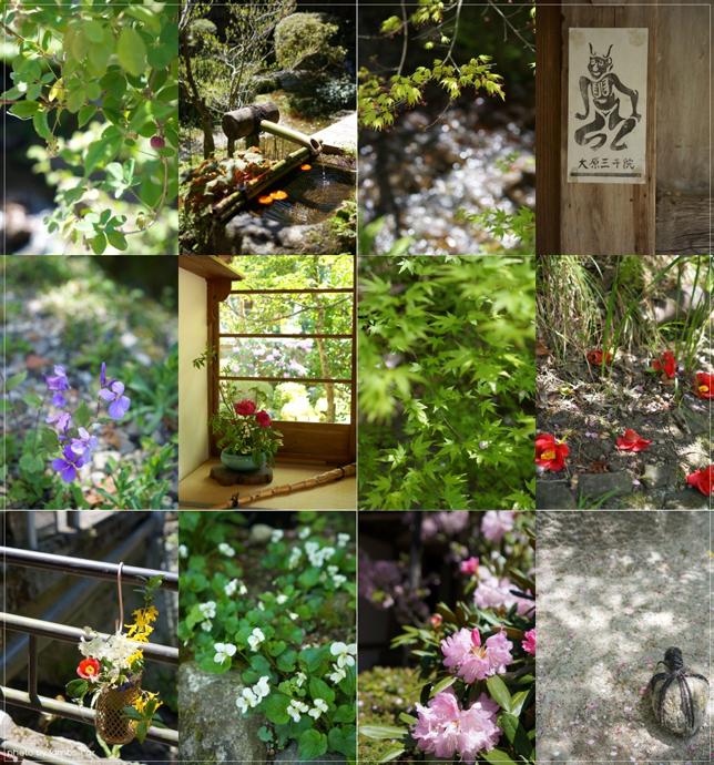 桜と風薫る京都*_f0151946_0341688.jpg