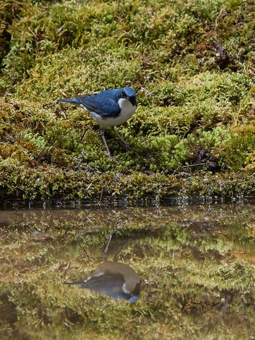 GW 鳥撮り遠征その3_f0113349_17562674.jpg