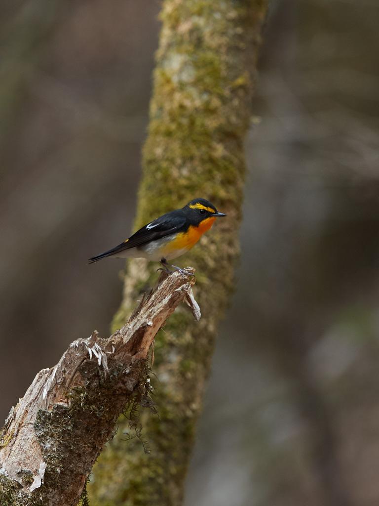 GW 鳥撮り遠征その3_f0113349_17564015.jpg