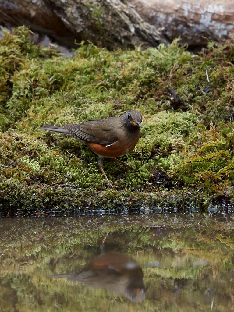 GW 鳥撮り遠征その3_f0113349_17564413.jpg