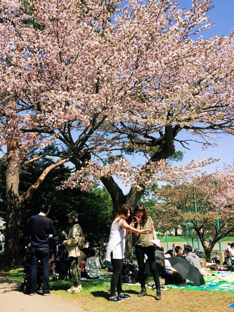 札幌のお花見で、これほど条件が整う年というのは、きっとそれほど多くはないと思う_b0103470_05523328.jpg