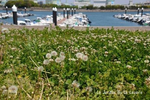 海のお散歩_f0329586_15350081.jpg