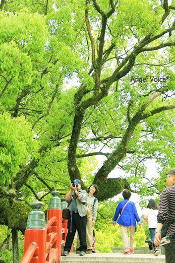福岡旅3_d0147742_15343959.jpg
