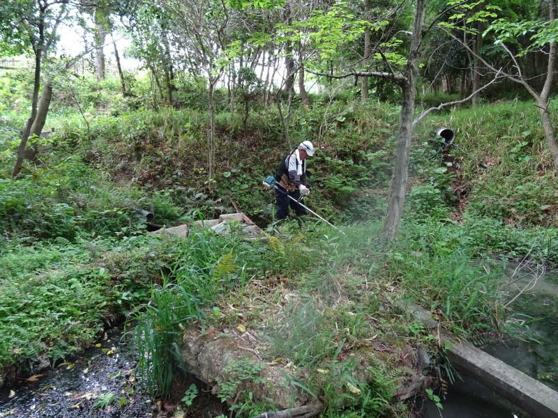 草刈り開始・・・うみべの森_c0108460_20291326.jpg