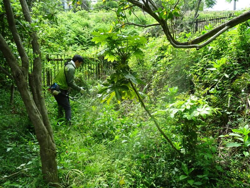 草刈り開始・・・うみべの森_c0108460_20303234.jpg
