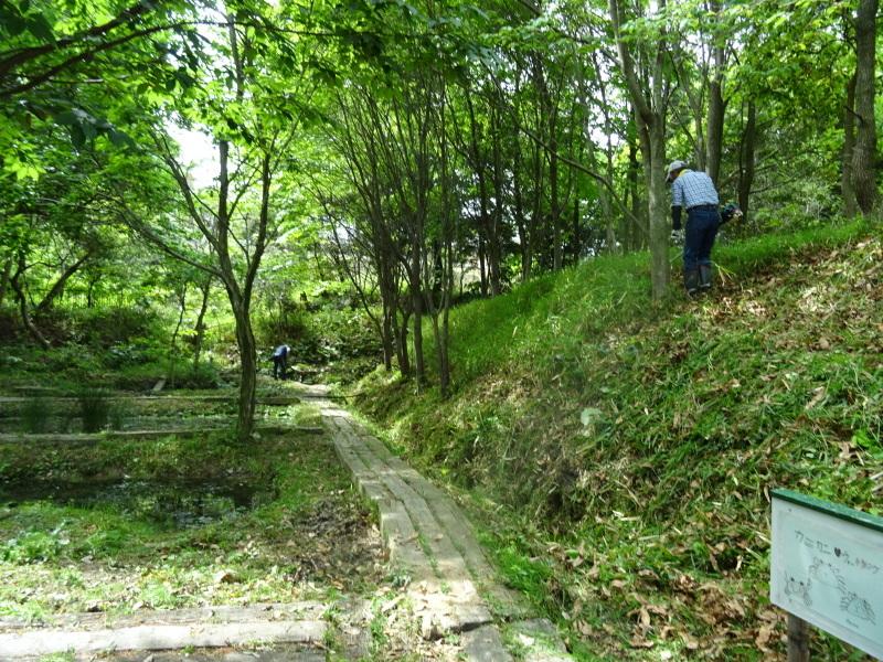 草刈り開始・・・うみべの森_c0108460_20312291.jpg