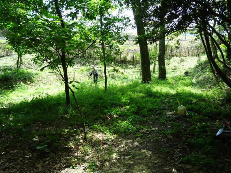 草刈り開始・・・うみべの森_c0108460_20382064.jpg