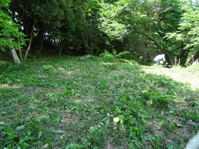 草刈り開始・・・うみべの森_c0108460_20392926.jpg