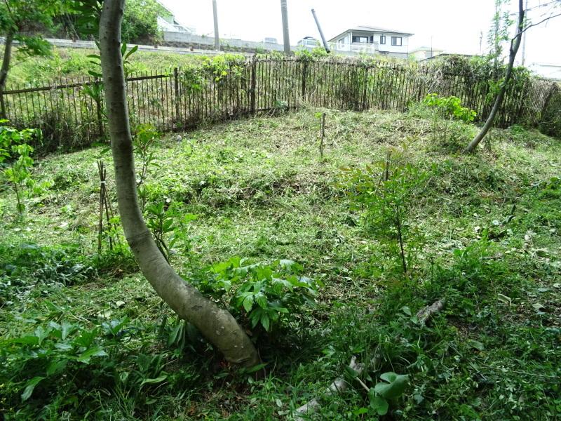 草刈り開始・・・うみべの森_c0108460_20402630.jpg