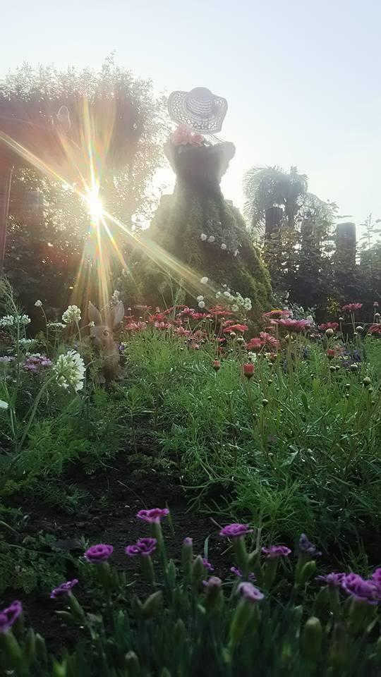 宮崎でこんな素敵な薔薇の花園があるんです・・・・それも今が絶好調🌹_b0137969_06585231.jpg