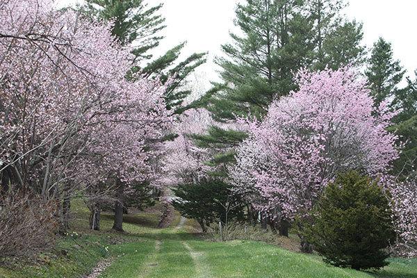 今年も置戸神社の桜_f0101174_14001214.jpg