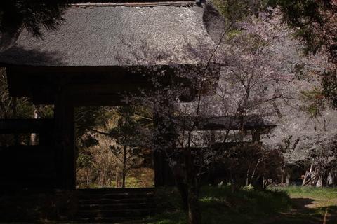 早池峯神社の桜_f0075075_18103720.jpg