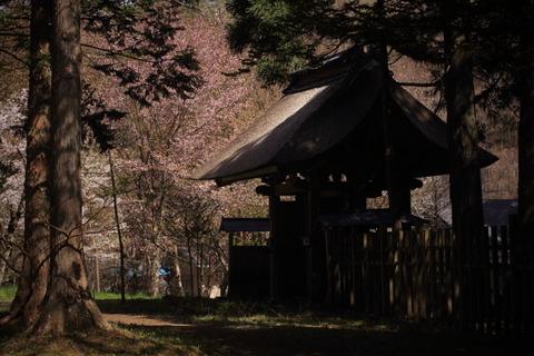 早池峯神社の桜_f0075075_18105841.jpg