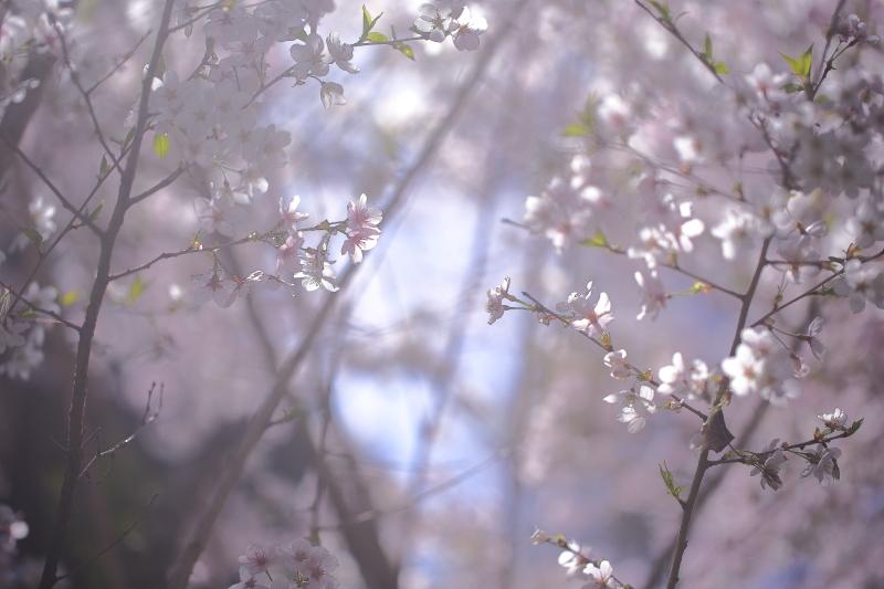 早池峯神社の花々_f0075075_1813112.jpg