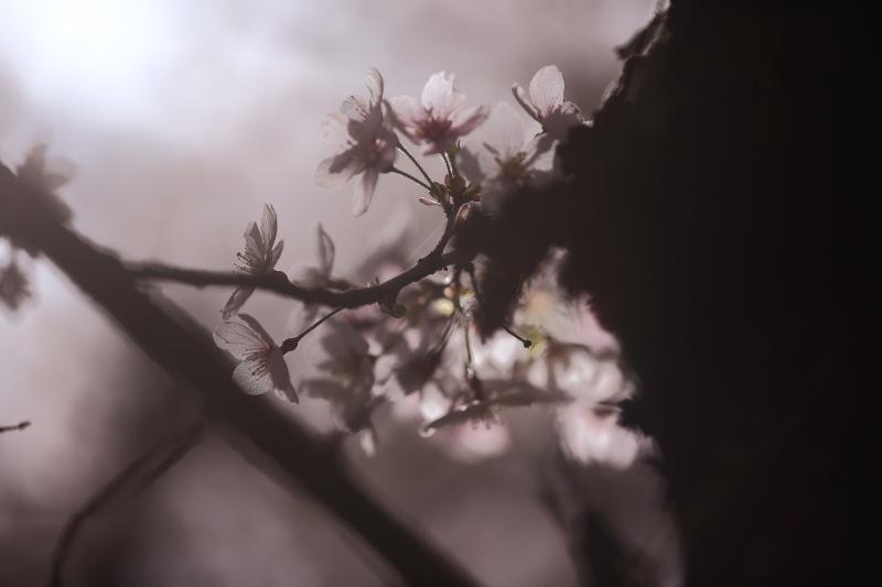 早池峯神社の花々_f0075075_18143243.jpg