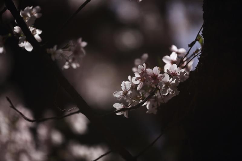 早池峯神社の花々_f0075075_1814656.jpg