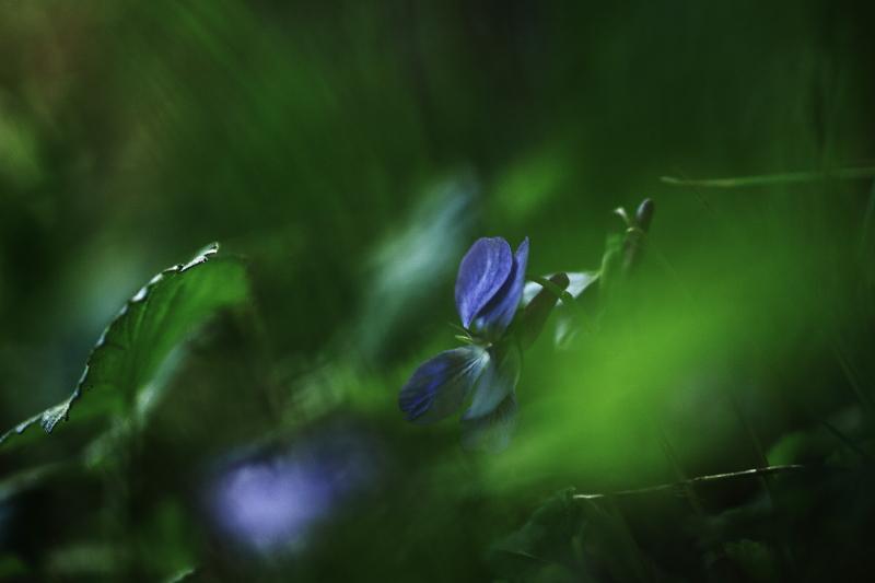 早池峯神社の花々_f0075075_18172980.jpg