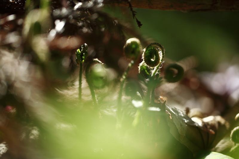 早池峯神社の花々_f0075075_1821723.jpg