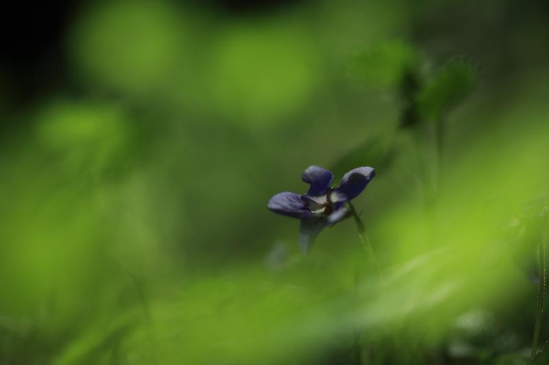早池峯神社の花々_f0075075_1827089.jpg