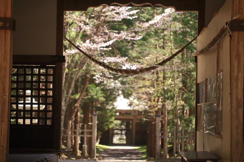 早池峯神社の桜_f0075075_1872928.jpg