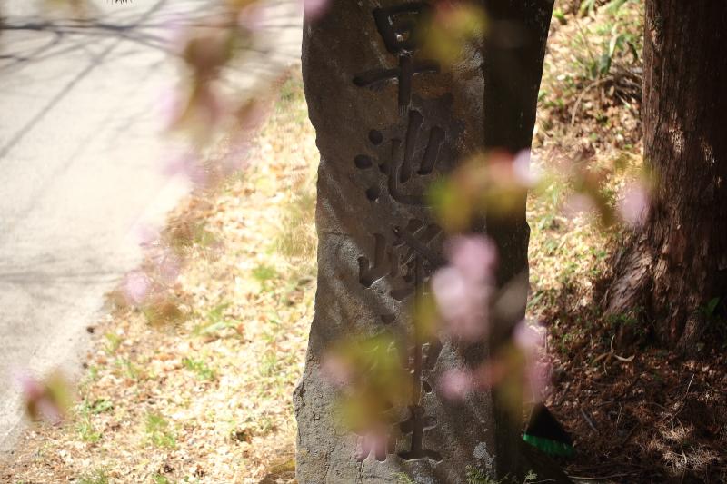 早池峯神社の桜_f0075075_1884716.jpg