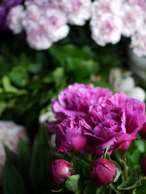2017/05/05の店内のお花。_b0171193_17591961.jpg