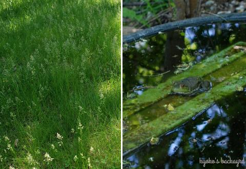 パティオに転がる猫。裏庭と前庭の様子(5月上旬)_b0253205_04592029.jpg