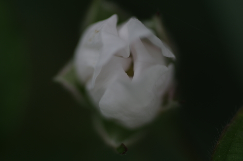f0155808_22120016.jpg