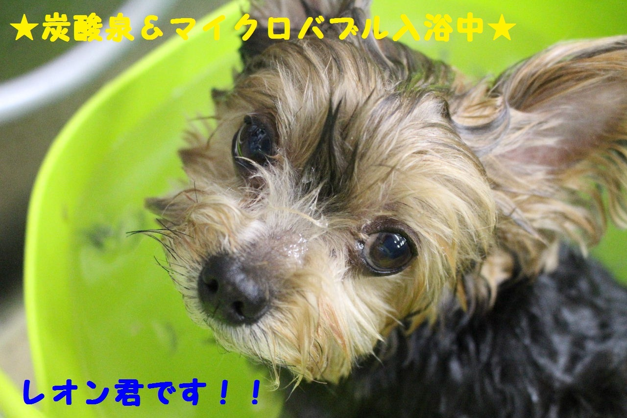 b0130018_10422699.jpg