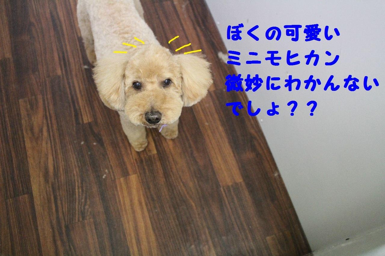 b0130018_10583651.jpg