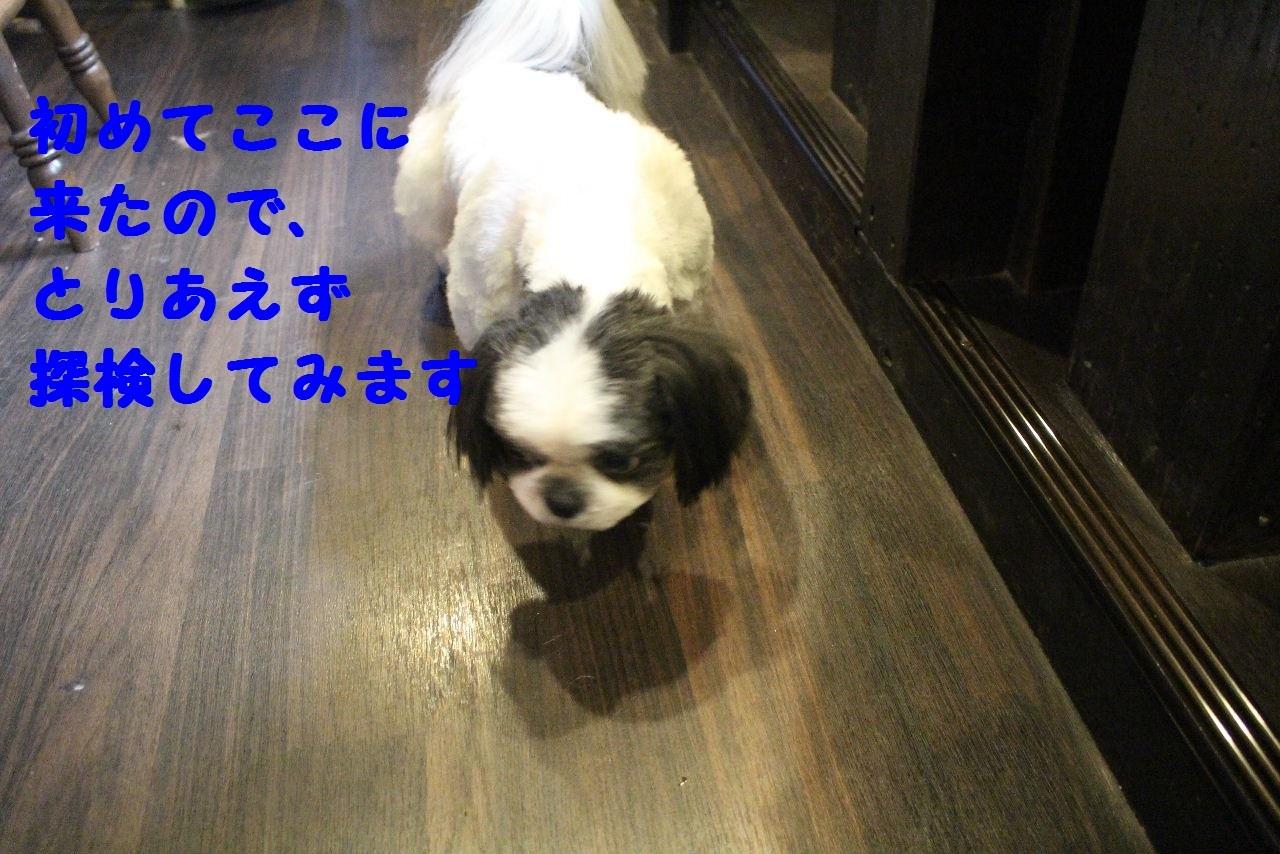 b0130018_14001198.jpg