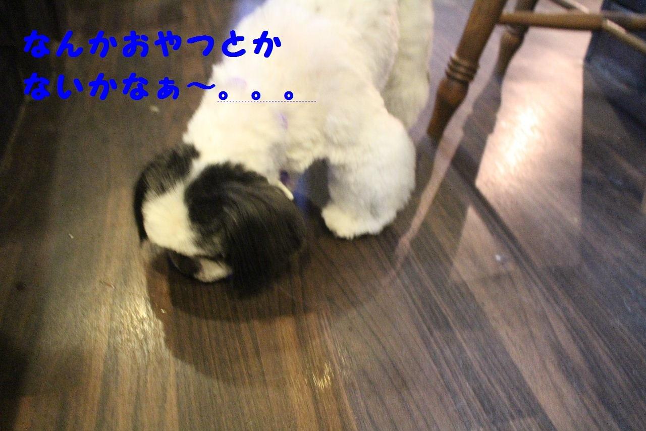 b0130018_14001825.jpg