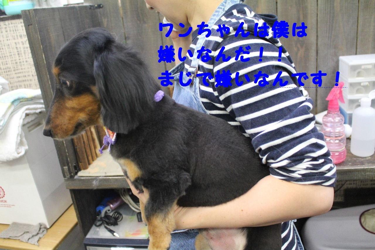 b0130018_14121057.jpg