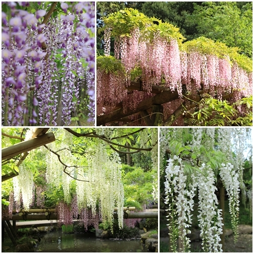 ゴールデンウィークの奈良散歩_b0165935_23030232.jpg