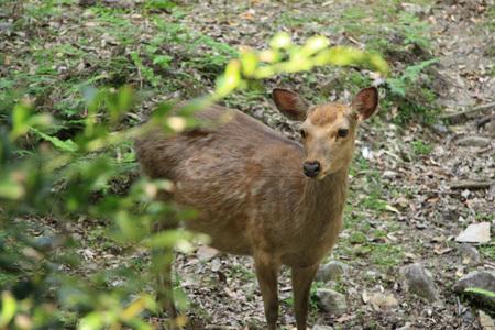 ゴールデンウィークの奈良散歩_b0165935_23034787.jpg