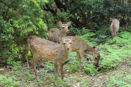 ゴールデンウィークの奈良散歩_b0165935_23035672.jpg