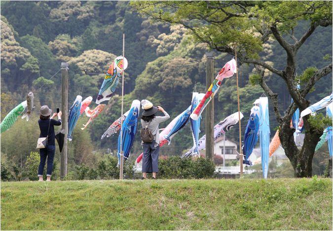 カツオと鯉のぼりの川渡し_a0256349_12143271.jpg