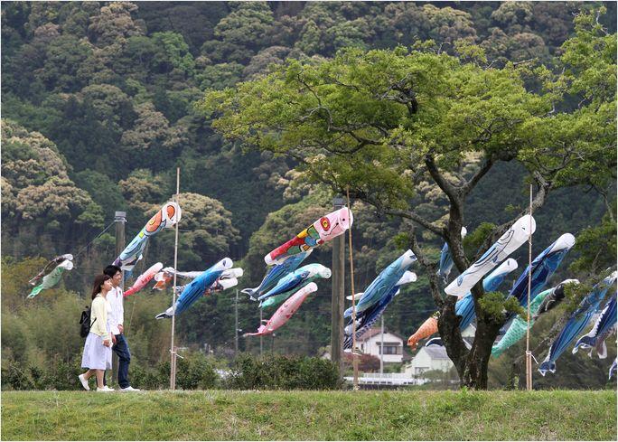 カツオと鯉のぼりの川渡し_a0256349_12145036.jpg