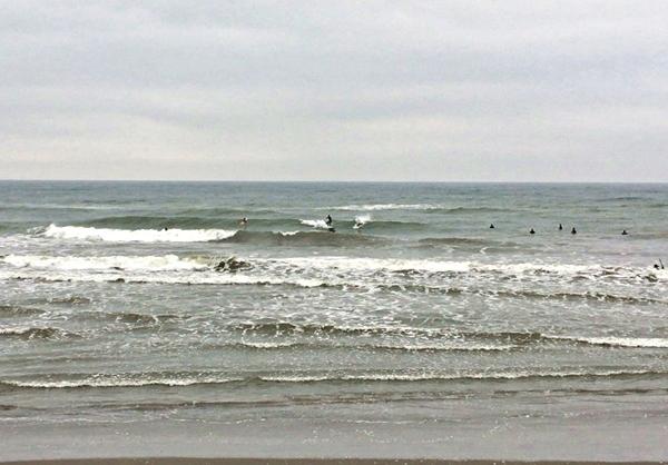 連休の海と浜辺の植物_c0019551_18180611.jpg