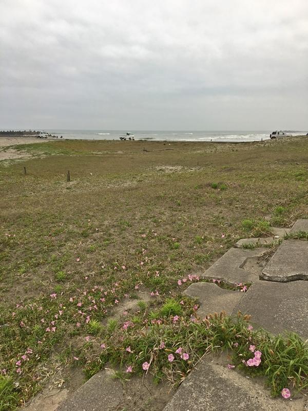 連休の海と浜辺の植物_c0019551_18181743.jpg