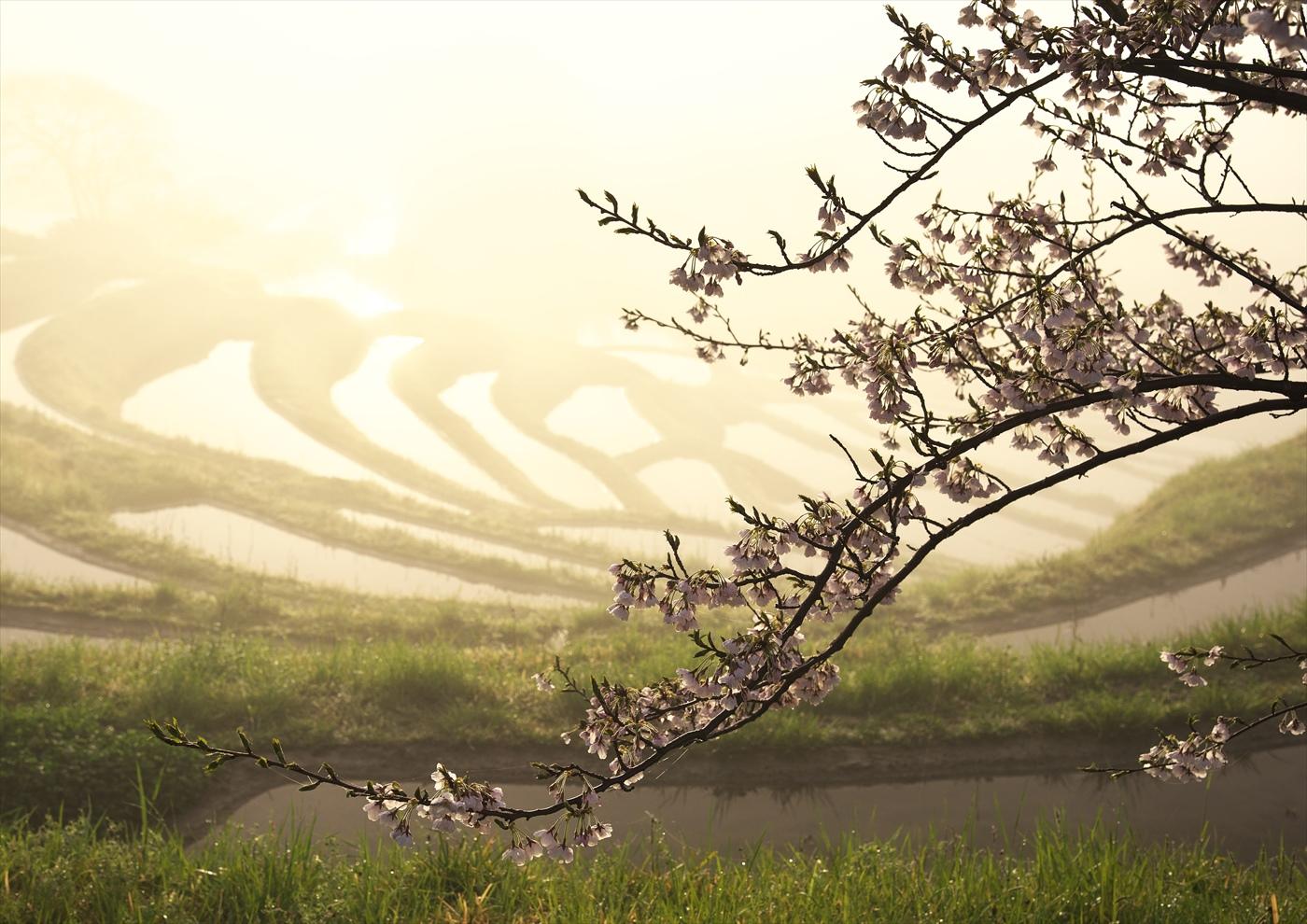 霧の夜明け 1 ~仲春の大山千枚田~_f0018464_626772.jpg