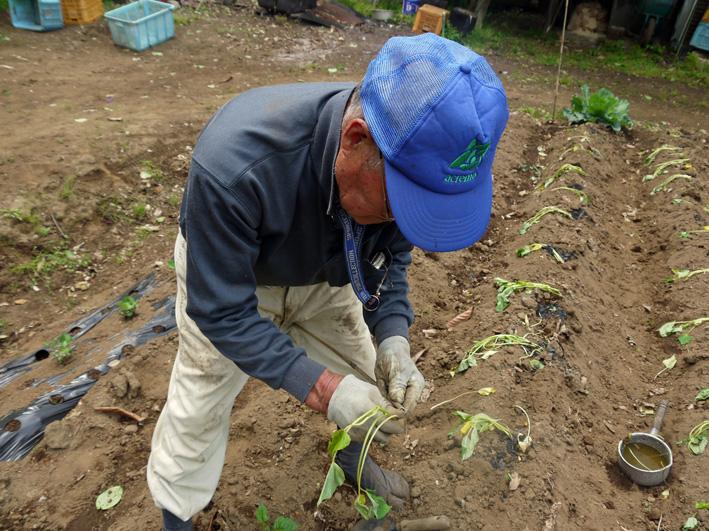 サツマイモの苗、竹棒使って斜め植え(5・3~4)_c0014967_652978.jpg