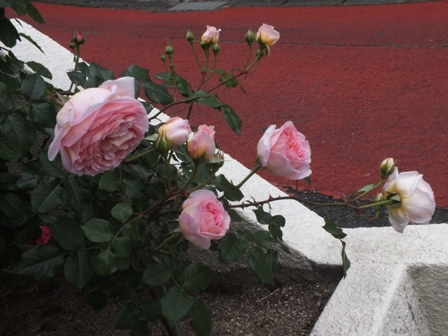 バラの季節_b0214473_1933641.jpg
