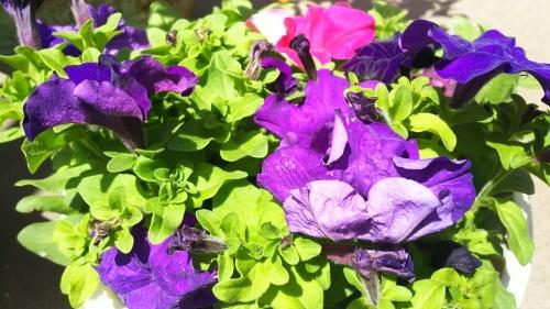 神戸から、お花が笑った_a0098174_18180881.jpg
