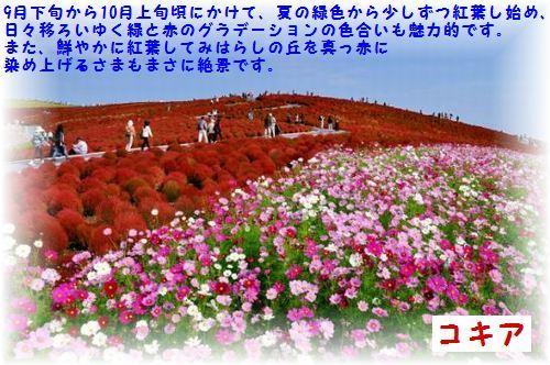 b0078675_11390010.jpg