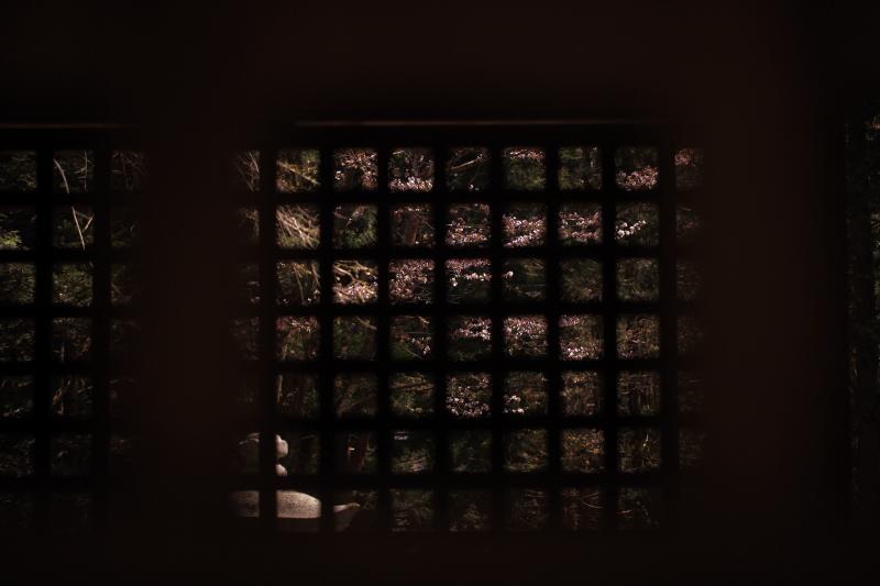 早池峯神社の桜_f0075075_19252283.jpg