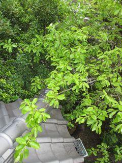 埼玉県の戸田市で雨樋掃除_c0223192_22250244.jpg