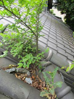 埼玉県の戸田市で雨樋掃除_c0223192_22250506.jpg