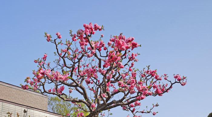 梅の花_d0162994_08290853.jpg