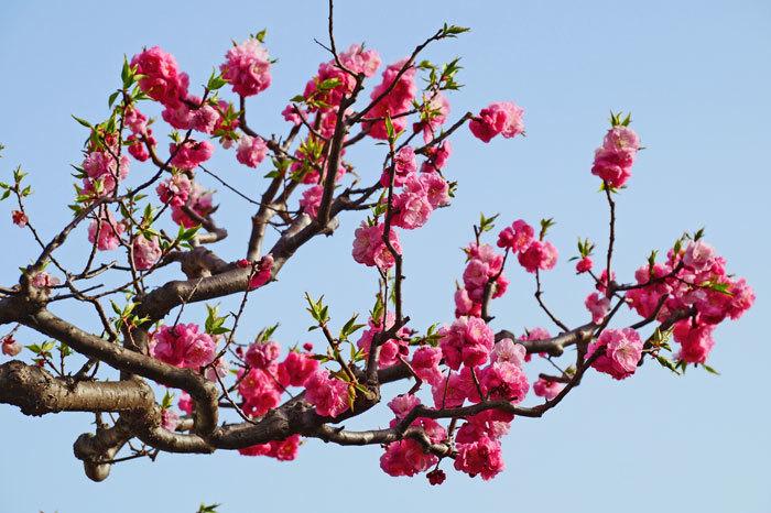梅の花_d0162994_08293347.jpg